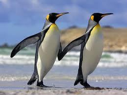 penguinbuds